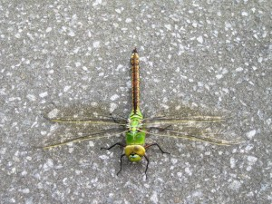 istock dragonfly