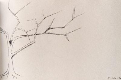 a tree a day, web-3