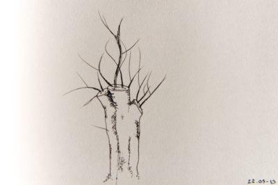 a tree a day, web-6