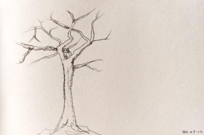 a tree a day, web-8