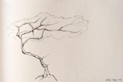 a tree a day, web-9
